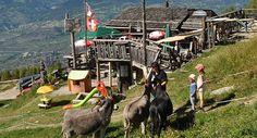 Caboulis - Veysonnaz Horses, Animals, Alps, Personal Attendant, Dance Floors, Mountain, Top, Animales, Animaux