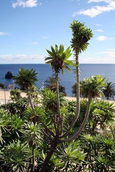 Zonnig Madeira   por Gafarferet