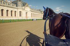 Hippodrome, Oise, Courses, Images, Louvre, Building, Travel, Animals, Beginning Sounds