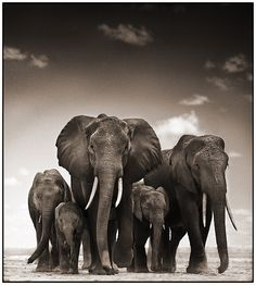 Nick Brandt photography = amazing shots!                                                                                                                                                                                 More
