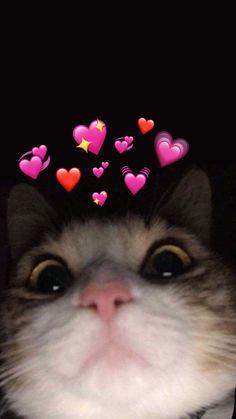 Cute Baby Cats, Cute Little Animals, Cute Funny Animals, Funny Cats, Baby Animals Pictures, Cute Animal Photos, Funny Animal Pictures, Funny Cat Wallpaper, Cute Cartoon Wallpapers