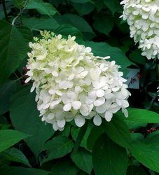 Roses Du Jardin Cheneland