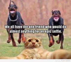 Do Anything For Epic Selfie Funny Images #funnyimages #funnypics #lol #gag