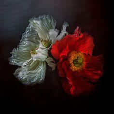 by Christine Ellger