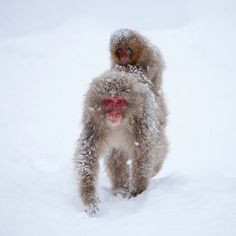 In the snow by Kiyo Photography (busy...), via Flickr