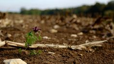 Lone plant on dirt photo by Pascal Frei ( on Unsplash Free Pictures, Free Images, Nature Plants, High Resolution Photos, Nature Photos, Green Leaves, Purple Flowers, Free Stock Photos, Agriculture