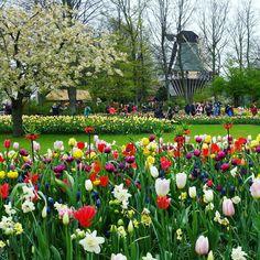 Keukenof garden amsterdam
