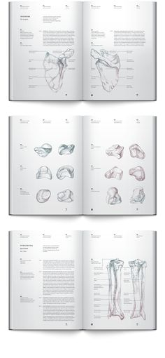 Anatomy book. Osteology on Behance