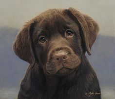 chocolate lab puppy!