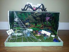 Spider diorama...school project...spider habitat