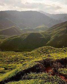 Tea time in Cameron Highlands #cameronbharat #cameronhighlands #malaysia #teaplantations #nature #green #tea #discovermalaysia #cotamwpodrozy #couple #travel #podroze