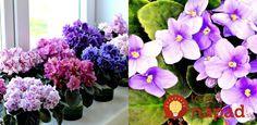 Má izbovky ako z kvetinárstva a kvitnú ako na baterky: Pestovateľka vám prezradí úplne jednoduchý zlepšovák, vďaka ktorému ich budete mať aj vy! House Plants, Home And Garden, Gardening, Flowers, Forks, Diy, Lawn And Garden, Bobby Pins, Bricolage