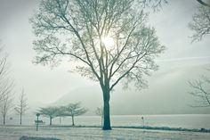 Fog over Winona, Minn. casts a crystal glow across East Lake Winona. Photo by Cynthya Porter www.visitwinona.com