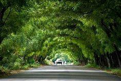 ....Hermoso tunel de la belleza natural, entre Neyba y Villa Jaragua, rumbo al Lago Enriquillo, la vista es una verdadera