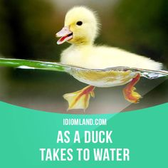 """As a duck takes to water"" means ""easily and naturally"". Example: The baby adapted to the bottle as a duck takes to water."