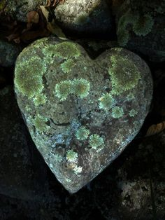 heart shaped rock.