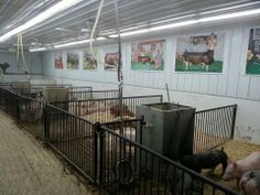 A great pig barn.