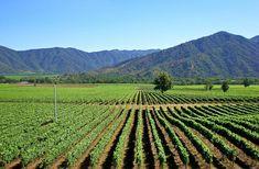 Valle do Colchágua (Rota do Vinho)