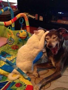 This cat who is whispering such obscene abuse into their dog's ear that the dog is crying out for help.   32 Cats Being Utter Twats To Dogs