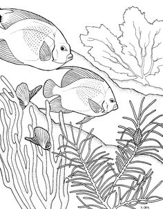 Coral Coloring Pages: Acquaint your kid with the residents of coral reef with our ten coral reef themed coloring pages. Make your world more colorful with free printable coloring pages from italks. Our free coloring pages for adults and kids. Ocean Coloring Pages, Fish Coloring Page, Animal Coloring Pages, Coloring Book Pages, Coloring Pages For Kids, Coloring Sheets, Mandala Coloring, Coral Reef Drawing, Drawn Fish