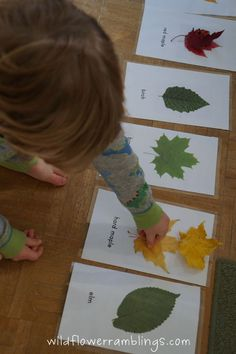 Leaf Identification Cards- free printables- This printable may not work for Alabama. Could laminate and/or color copy some local leaves to make our own. Science Montessori, Montessori Classroom, Kindergarten Science, Classroom Activities, Preschool Activities, Science Classroom, Educational Activities, Nature Activities, Autumn Activities