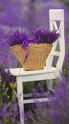 Image result for sitting lavender garden wallpaper and backgrounds