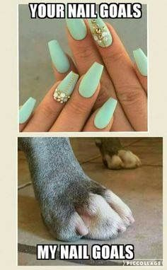 Dog Grooming - missdoolittles - Tap the pin for the most adorable pawtastic fur baby apparel! Youll love the dog clothes and cat clothes! Dog Grooming Salons, Grooming Shop, Dog Grooming Tips, Dog Grooming Business, Poodle Grooming, Pet Tips, Creative Grooming, Vet Assistant, Tech Humor