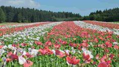 Ausflugsziel in Niederösterreich Vineyard, Plants, Outdoor, Poppy Seed Recipes, Floral Paintings, Communities Unit, Road Trip Destinations, Woodland Forest, Nature
