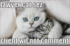 purrfect legal advice  do you have 24/7 legal access?