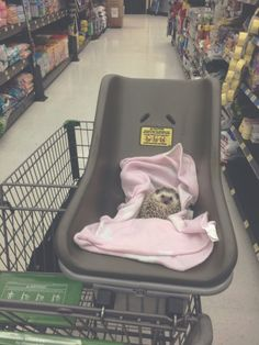 wildflower-r:seri0uslybecca: i take my hedgehog grocery shopping and nobody tells me to stop   why would they
