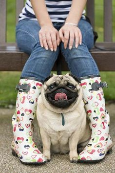 A pug surrounded by love <3
