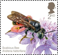 Celebrating the UK's bee population. The stamps feature illustrated images of various bee species from across the UK.