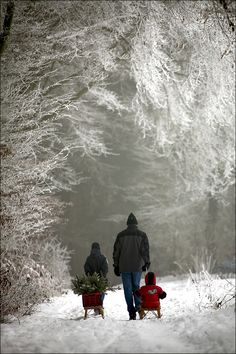 Winter - 24.08.2011 von Izabela Reimers - Bringing home the tree!