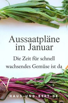 Sowing plans in January. You can harvest fast-growing vegetables in spring. Now sow lettuce, kitchen herbs and several flowers. Seed for your garden, seed calendar, sowing calendar, sowing plans. Plan Potager, Potager Bio, Garden Types, Rotation Des Cultures, Fast Growing Vegetables, Growing Tomatoes, Seed Tape, Yucca, Vegetable Bed