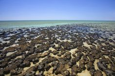 Shark Bay, Australia, one of the very few places on the planet where you can see living stromatolites.