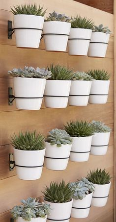 Multi-pot wood wall for succulents,  terrace cotta pots and pallet wood.