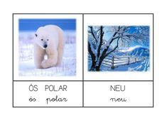 Polar Bear, Christmas Time, Education, Winter, Animals, Esl, Romans, Montessori, Special Education