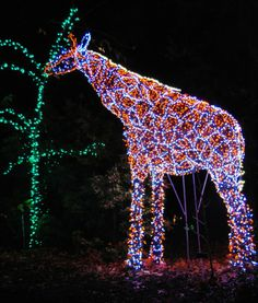 holiday road trip garden of lights at brookside gardens in wheaton maryland - Christmas Lights Maryland