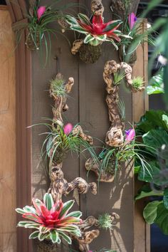 New in the Solarium: Driftwood and Bromeliads. Yes and yes   http://rogersgardens.com/outdoor-gardens-garden-rooms/