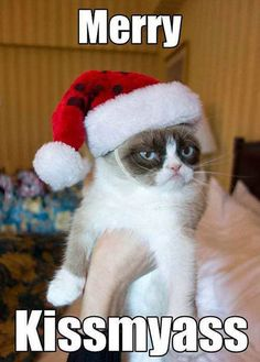 Grumpy cat christmas, grumpy christmas, christmas humor... For the best christmas jokes visit www.bestfunnyjokes4u.com/funny-christmas-pics/
