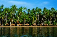 En playa Medina deleítate con su belleza natural y el contraste de los cocoteros con las aguas azules del inmenso Mar Caribe   #Playa #Venezuela #Mochima