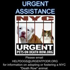 HELP IS HERE! Urgent DOG Help Desk - - Info  Please Share:**PLEASE NOTE OUR NEW HELP DESK EMAIL ADDRESS** -  Click for info & Current Status: http://nycdogs.urgentpodr.org/help-is-here/