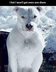 Not pinning because of the caption, but because this dog is gorgeous.