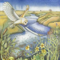 Barn Owl at Blakeney (print and card)                                                                                                                                                                                 More