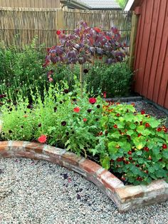 Discover the best plants for your very own backyard vegetable garden. Check out our article that shows you the easiest plants to get started. Small Garden Fence, Garden Edging, Small Garden Design, Garden Beds, Garden Paths, Small Gardens, Outdoor Gardens, Australian Garden, Garden Cottage