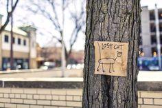 #LostCat last seen in downtown #NewYorkCity -  http://www.tsu.co/paidposts