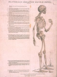 Andreas Vesalius (https://pinterest.com/pin/287386019942054803) - Tabulae Sex.