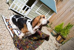 ❤ =^..^= ❤  NaC! Charly & Ben's Crafty Corner: Pets on Quilts 2014