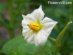 Photo abflowers5122.jpg