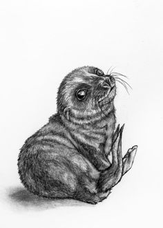 Original Pencil Drawing Baby Seal 25 by rachelledyer on Etsy